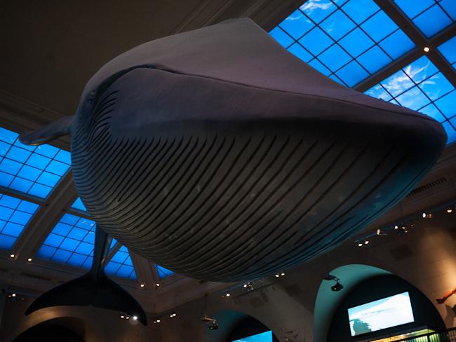 Синият кит си беше внушителен