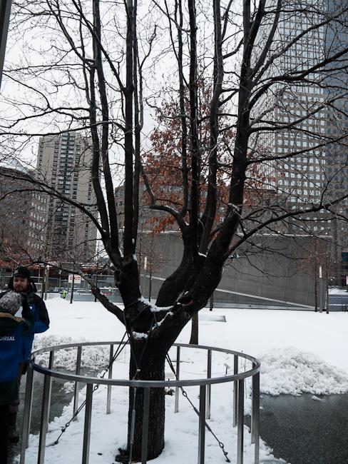 Дървото на надеждата